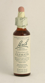 Clemantis Bach Flower Remedy