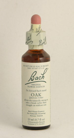 Oak Bach Flower Remedy