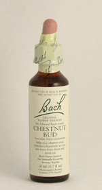 Chestnut Bud Bach Flower Remedy