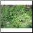 Thyme Photo by Philip Fritchey, M.H., N.D., CNHP All Rights Reserved - HISgoodherbs.com